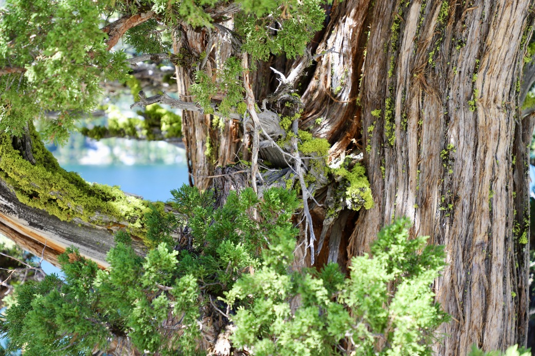 20180702mo1124-echo-lake-tahoe-area-hiking-trails-6240x4160-IMG_1912